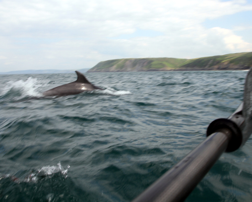 Passing Dolphin whilst Sea Kayaking